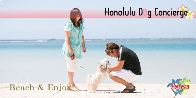 愛犬とハワイのビーチで楽しむ